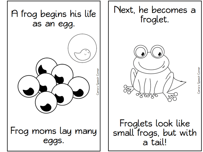 image regarding Printable Mini Booklets referred to as 13 Frog Existence Cycle Supplies and Printables - Practice Junkie