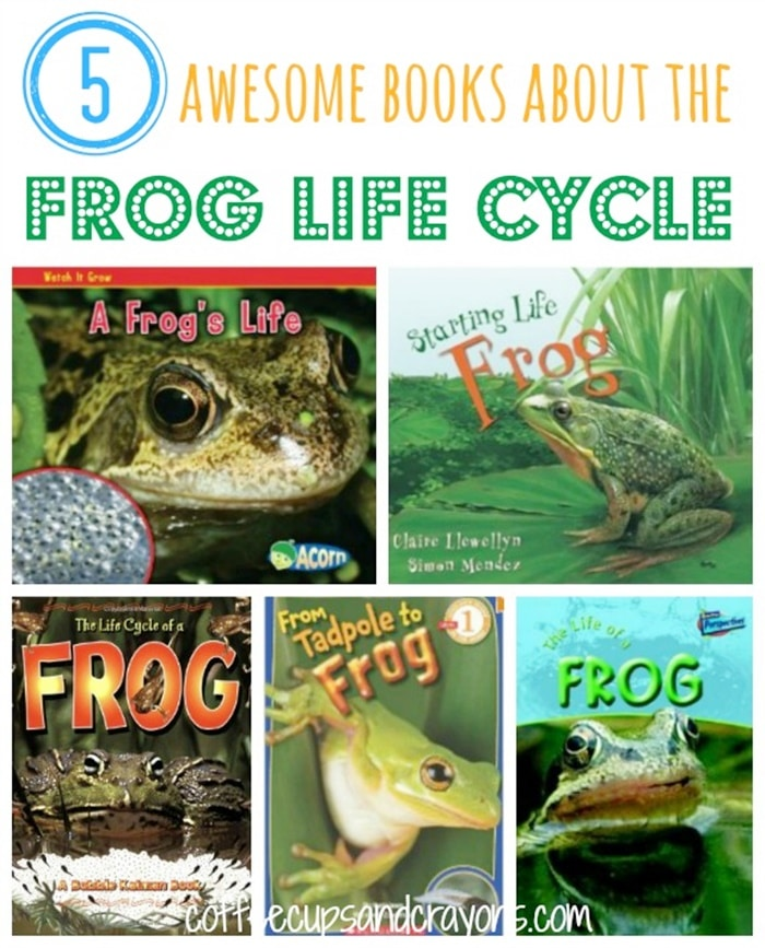 13 Frog Life Cycle Resources and Printables - frog life cycle books - Teach Junkie