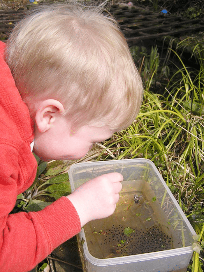 13 Frog Life Cycle Resources and Printables - how to raise tadpoles - Teach Junkie