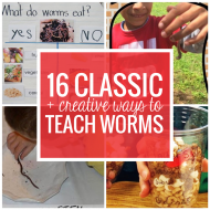 16 Classic and Creative Ways to Teach Worms