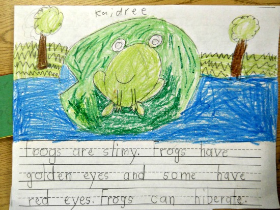 Teach Junkie: 25 Easy Frog and Toad Ideas and Activities - Frog Informational Writing