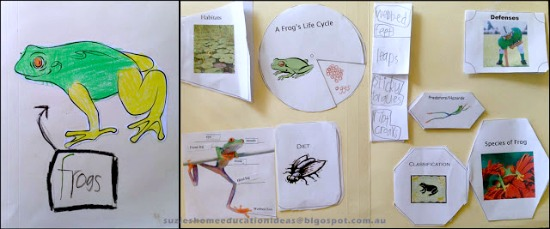 Teach Junkie: 25 Easy Frog and Toad Ideas and Activities - Life Cycle of a Frog Foldable Resources