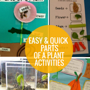 4 Easy and Quick Parts of a Plant Activities - Teach Junkie