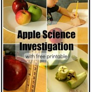 Free Apple Science Observation Worksheets