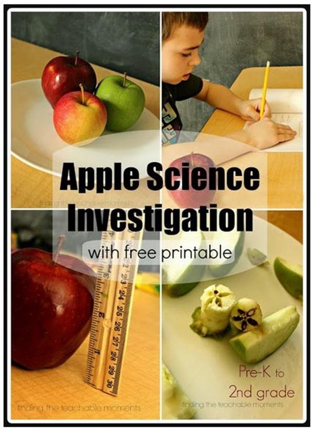 free apple science observation worksheets