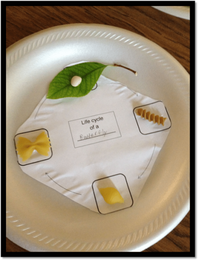 Bananapillars Fun and Free Butterfly Life Cycle Activities - create a pasta life cycle