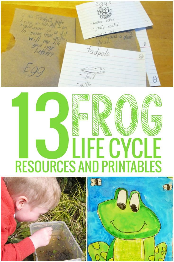 Frog Life Cycle Resources and Printables - I love these! - Teach Junkie