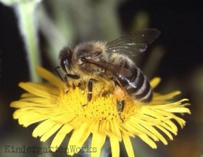 3 Go-To Honey Bee Resources for Teachers - Teach Junkie