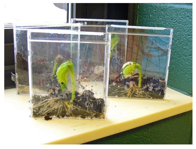 Growing Plants in the Classroom Just Got Cooler - Teach Junkie
