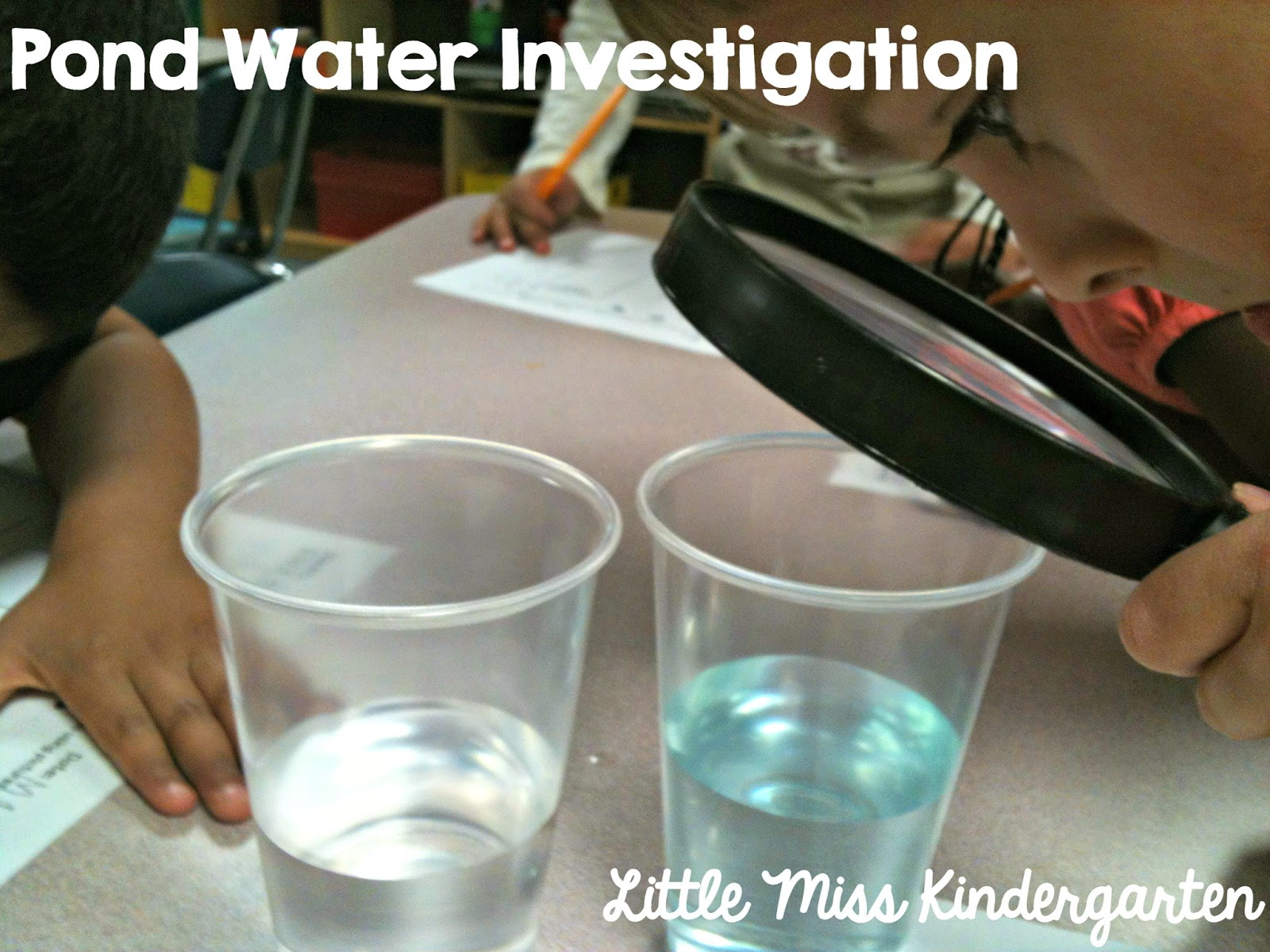 Pond Water Observations and Investigation - Teach Junkie