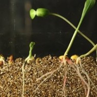 Seed Germination: Observe and Analyze